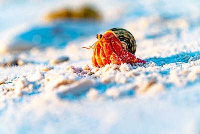 Hermit crab on beach