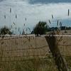 Australia, Rural scenics from the Kings Highway.