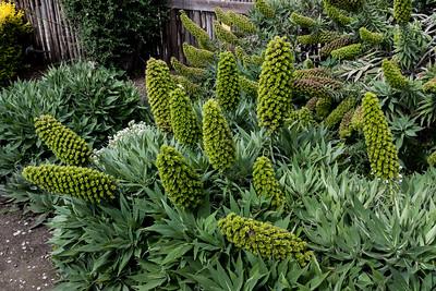 Flora, Tasmania