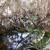 Springlawn Nature Walk, Narawntapu NP