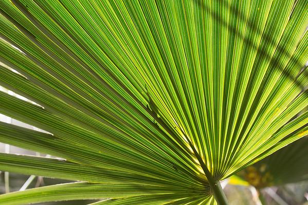 Pandanus Frond Lawn Hill National Park, Queensland, <br /> Boodjamulla