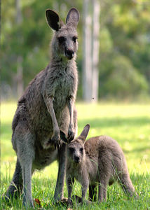 Roo with Joey