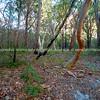 Fraser Island, Queensland, Australia-7
