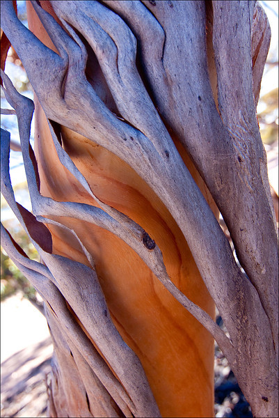 South Australia,