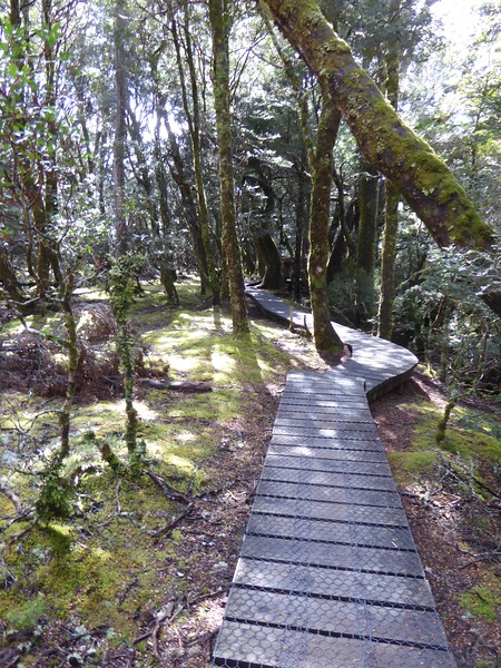 Enchanted Trail, Cradle Mountain