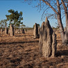 Termite Mounds, Queensland