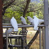 Cockatoos getting fed at neighbors cabin, Hall's Gap