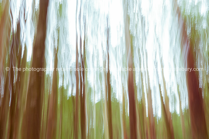 Abstract vertical blur forest environment for backgrounds banners and effects.