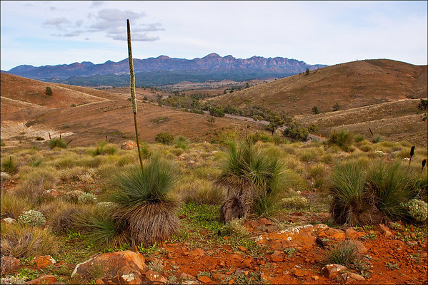 Grass Tree, South Australia