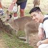 Kangaroos at Lone Pine Koala Sanctuary (Brisbane)