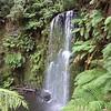 Beauchamp Falls, Otway NP
