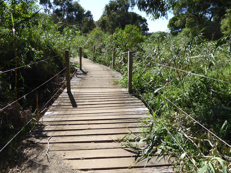 Boardwalk at Tower Hill, Warnambool