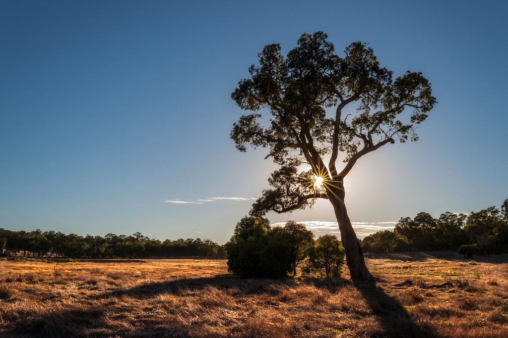 Morning on the farm, Perth Hills, Western Australia