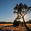 Morning on the farm, Perth Hills, Western Australia