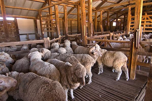 Tolarno Station Shearing Shed