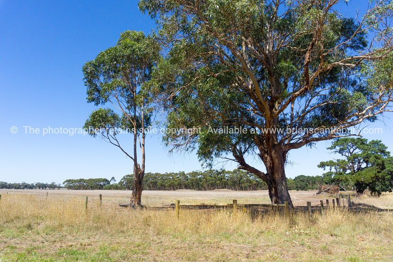 Typical Australian rural landscape.