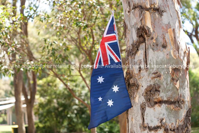 Australian flag in gum tree, two Australian icons.