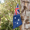 Australian flag in gum tree, two Australian icons.