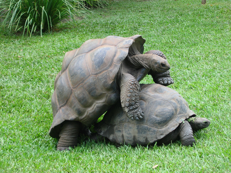 Darwin's Tortoise and Natural Selection - Australia