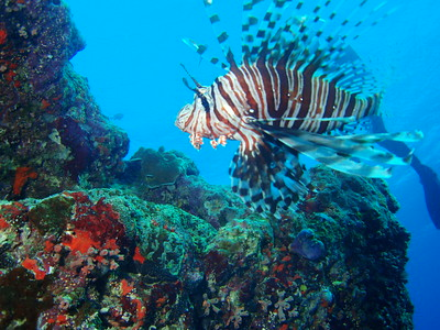Diving on the Great Barrier Reef, Australia