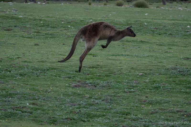 Australia-2191