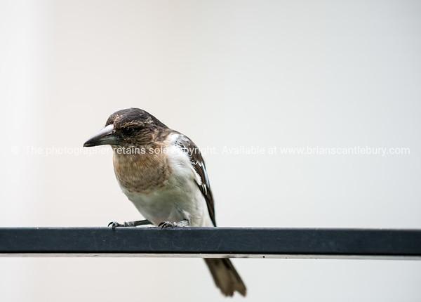 Bird on rail.