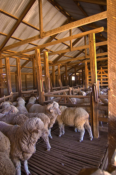 Taralno Station Shearing Shed
