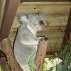 Lone Pine Koala Sanctuary (Brisbane)