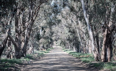 Typical Australian rural back country road.
