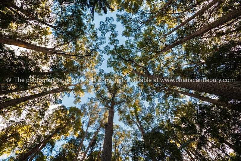 Fraser Island, Queensland, Australia-2