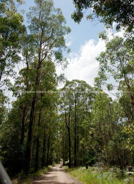 Bush track, road through gum trees and bush in Bald rock National Park, Australia.