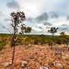 Bush Trails. Undara, Australia