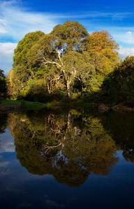 Tree Reflection - Melbourne Botanical Garden