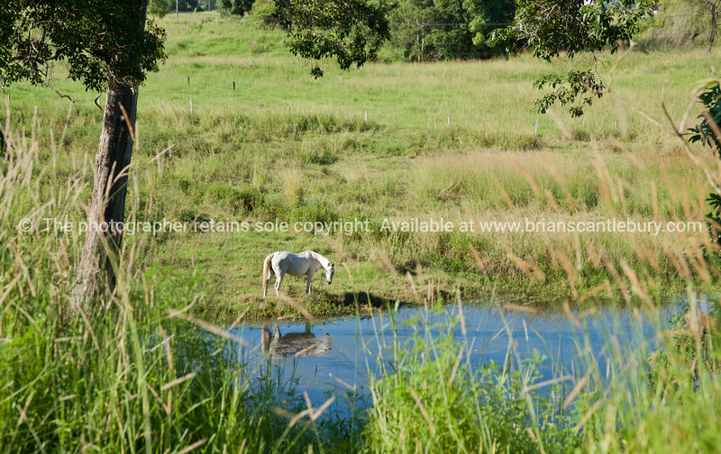 """White horse reflected in creek.<br />  see also <a href=""""http://smu.gs/14LcY8Y"""">http://smu.gs/14LcY8Y</a> Fine Art Photograhpy for  landscapes."""