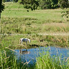 "White horse reflected in creek.<br />  see also <a href=""http://smu.gs/14LcY8Y"">http://smu.gs/14LcY8Y</a> Fine Art Photograhpy for  landscapes."
