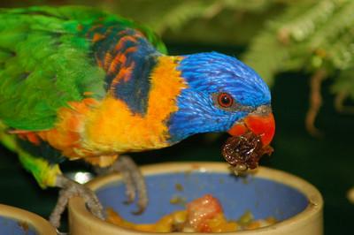 Copy of Parrot