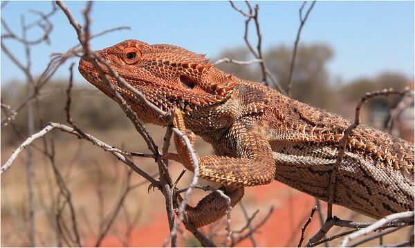 Northern Territory, Chambers Pillar