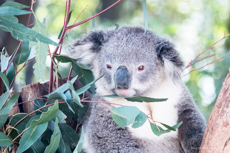 Australia-1143