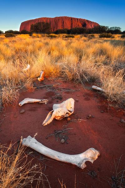 The boneyard Dingo feast and Uluru (Ayers rock). Camel remains, Uluru-Kata Tjuta national park, Australia.<br /> <br /> © Douglas Remington - Ethereal Light Photography, LLC. All Rights Reserved. Do not copy or download.