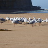 Seagulls at Gibson Steps Beach, Great Ocean Road