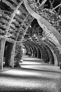 Leafy passage in Brisbane