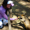 Jeane feeding kangaroo