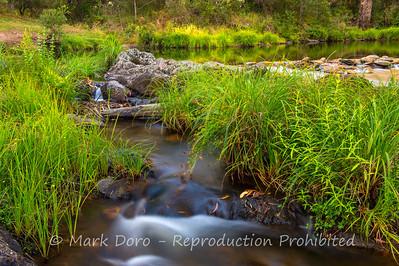 Grasses, Howqua River, Victoria
