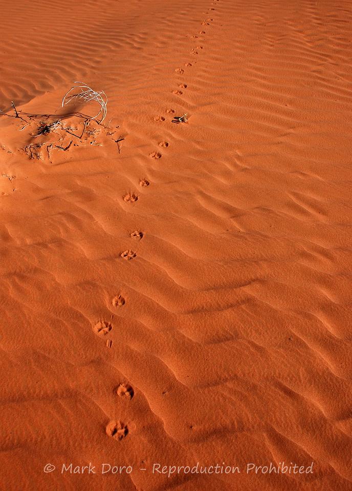 Dingo track, Simpson Desert