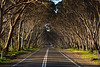 Living Tunnel