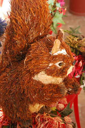 A squirrel for Linda