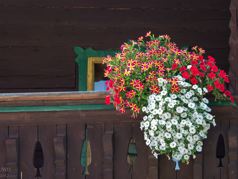 Petunias at Kaiserhaus