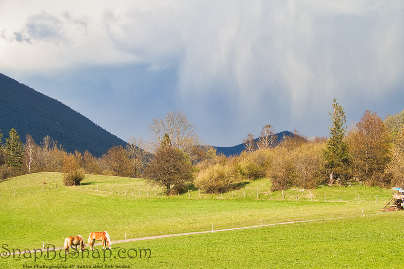 Horses grazing in a Field with a Storm