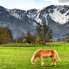 Horse in the Alps