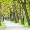 Sidewalk in Forest